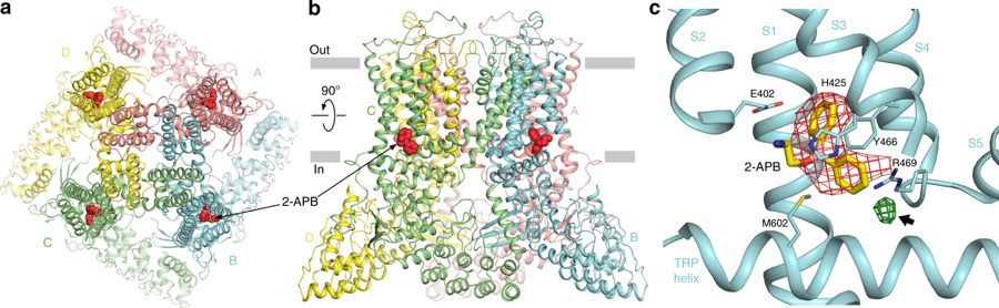 Structural bases of TRP channel TRPV6 allosteric modulation by 2-APB